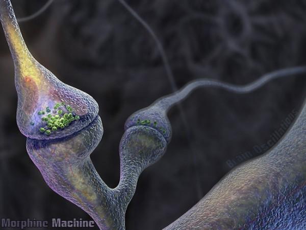 memory nerves
